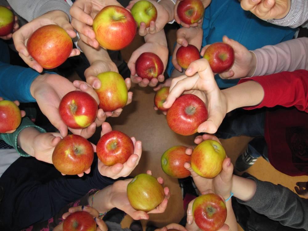 Schulfrucht