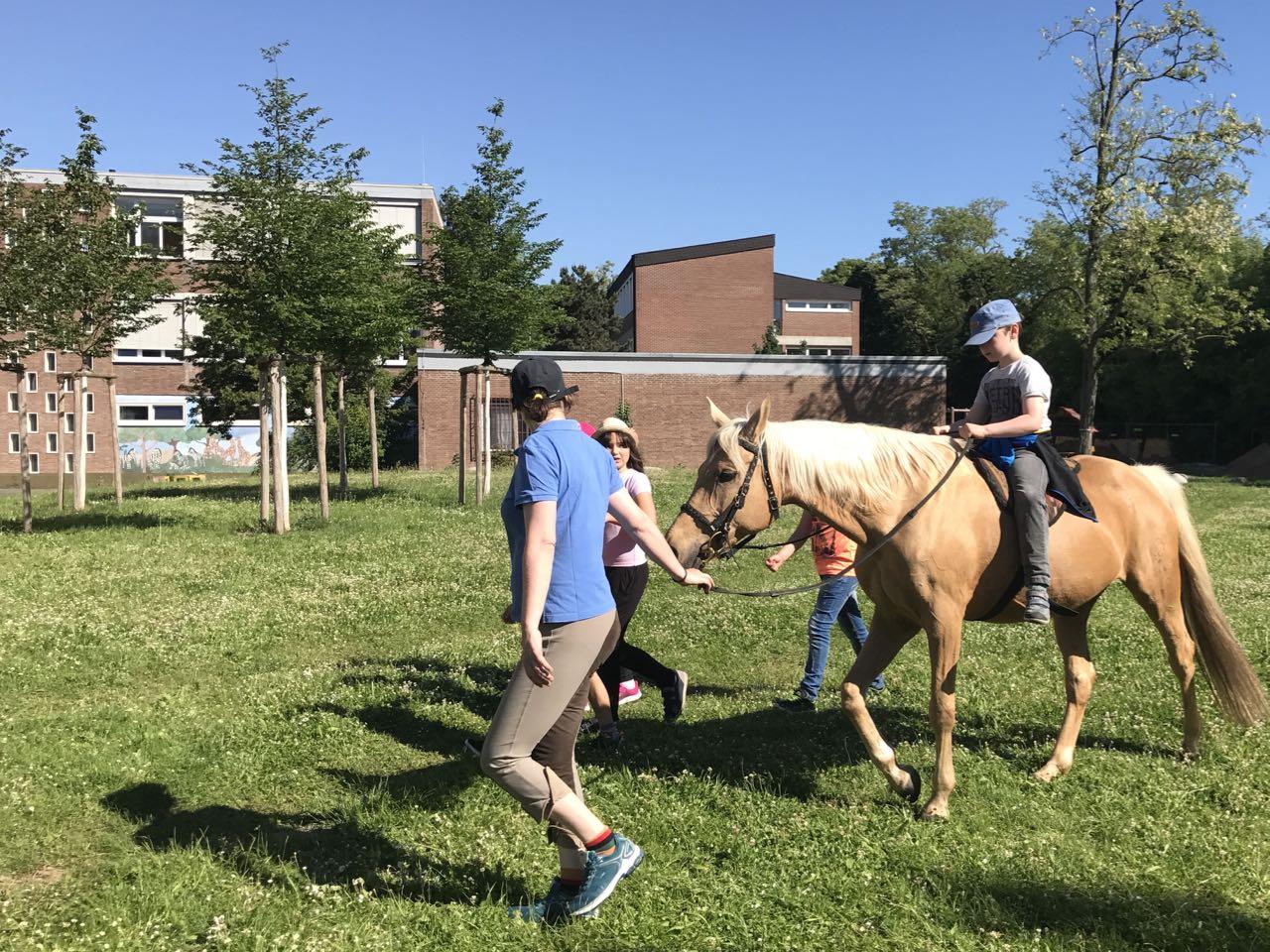 2017-05-26_Pferde-in-GHS