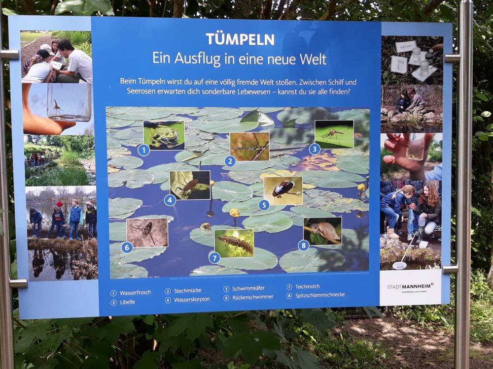 2018-06-22_3a_Tuempeln