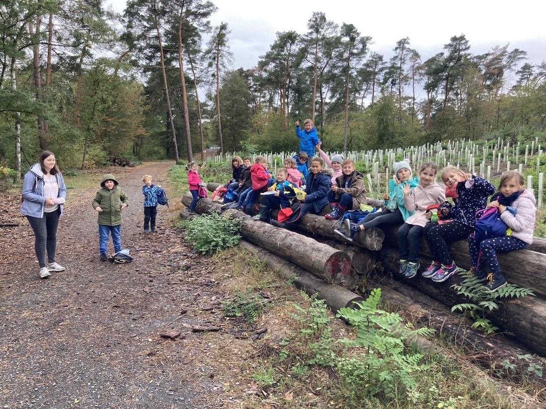 2020-10_2a-Herbstwald.jpg