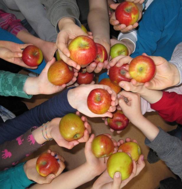 Schulfrucht-Äpfel
